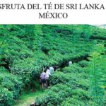 Disfruta de Té de Sri Lanka en México