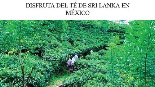 té de Sri Lanka en México